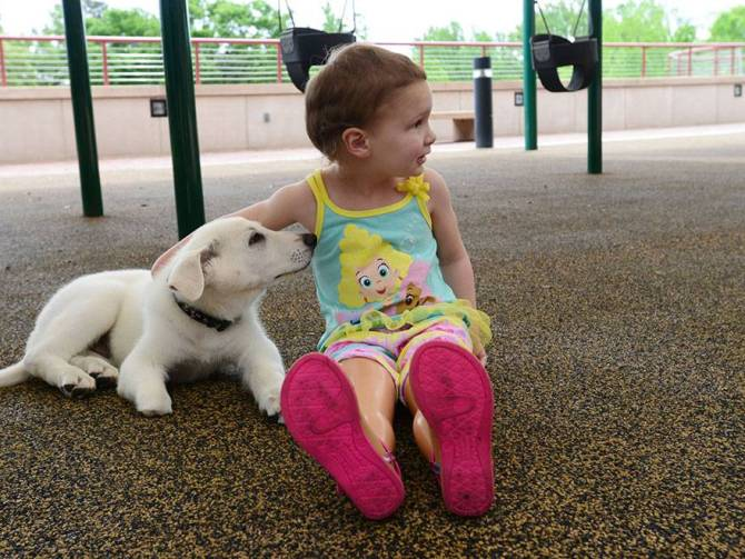 3-year-old-girl-amputated-legs-puppy-without-paw-sapphyre-johnson-lt-dan-4