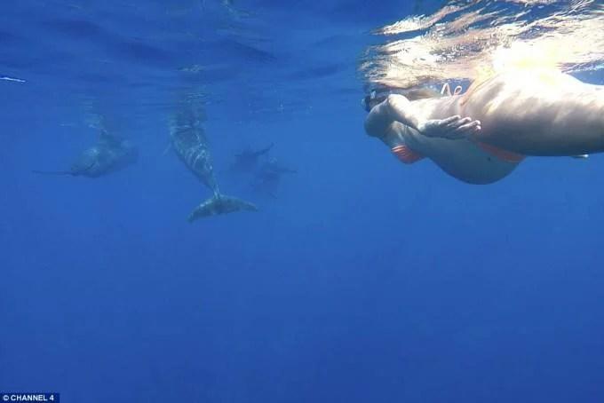 donna con delfini