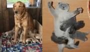 mamme animali