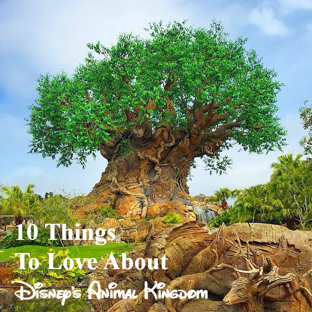 Animal kingdom podcast