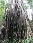Bosque pluvial en Jardín Botánico
