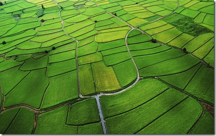 Rice Paddy - unpocogeek.com