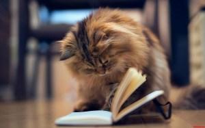 estudar no fim de semana