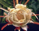 OrchidCactus-43-49-preset17-cust(Web)