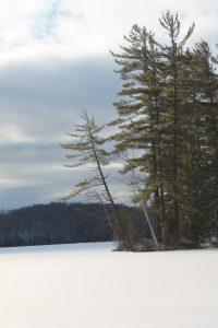 Winter Walks 186