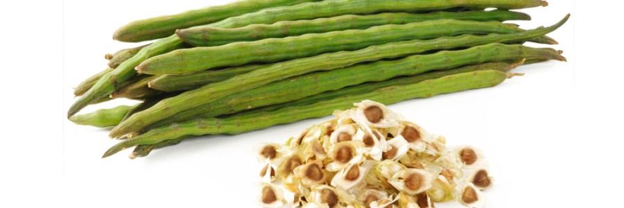 Consumir Moringa genera más de 15 beneficios para la salud