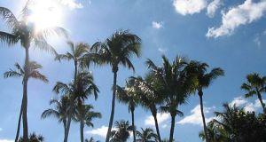 Palmiers en Floride