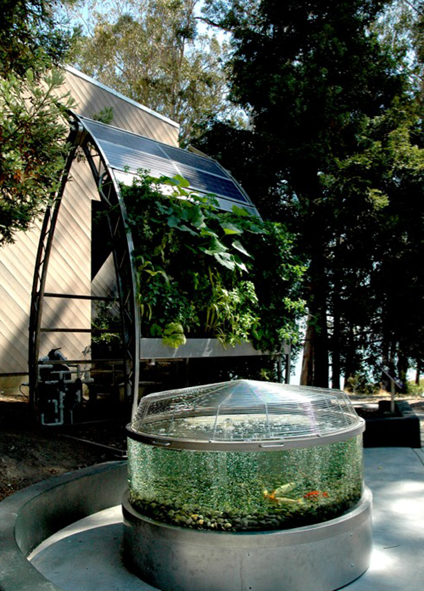 Vertical aquaponic gardening takes shape urban gardens for Garden with fish tank