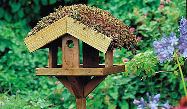 Are Green Roofs For The Birds Urban Gardens