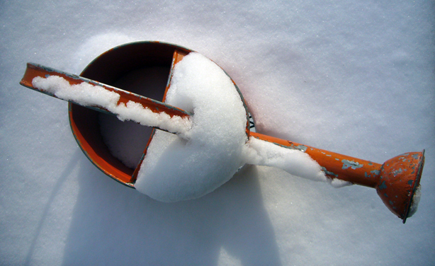 orange_watering_can_in_snow_snow_plant_urbangardensweb