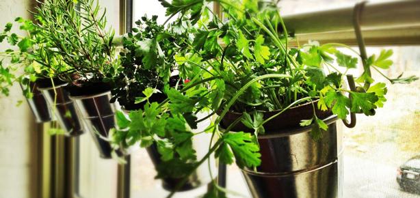 Window Herb Garden Pots Diy window herb garden from ikea pots urban gardens i workwithnaturefo
