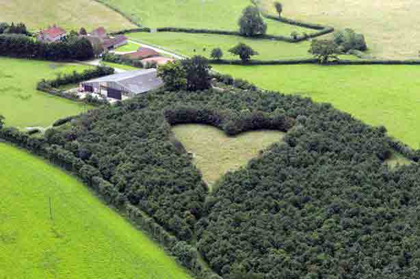 The+giant+heart+formed+with+6000+oak+trees+which+Winston+Howes+planted+in+memory+of+his+late+wife+Janet