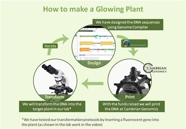 glowing-plants-how-to