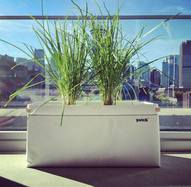 patch-planter-on-urban-windowsill