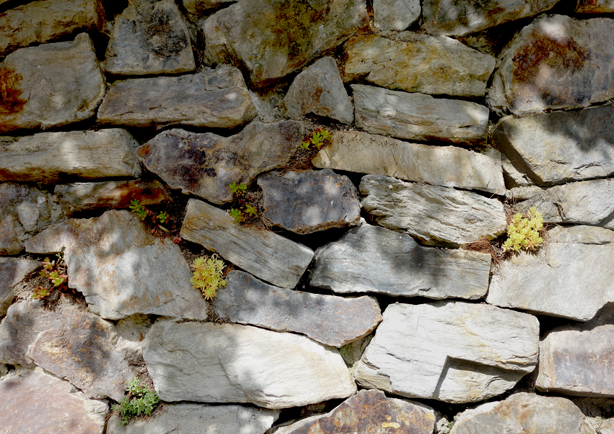 green-side-wall-jardi-tarradellas-stone-wall-base-sedums-detail-urbangardensweb