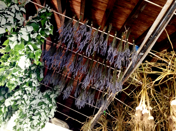 stone-barns-lavender-drying-urbangardensweb
