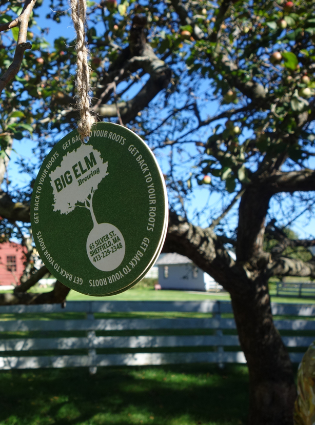 big-elm-beer-coaster-in-tree-oif-urbangardensweb