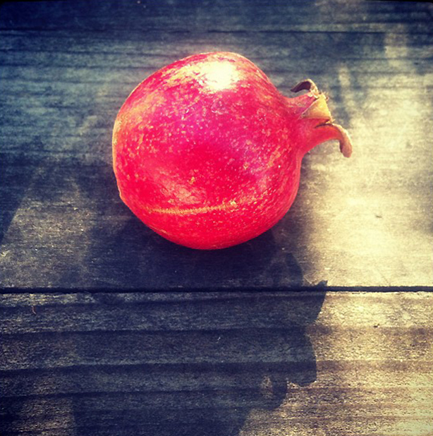 pomegranate-instagram-urbangardensweb