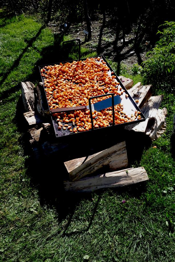 tomatoes-grilling-oif-urbangardensweb