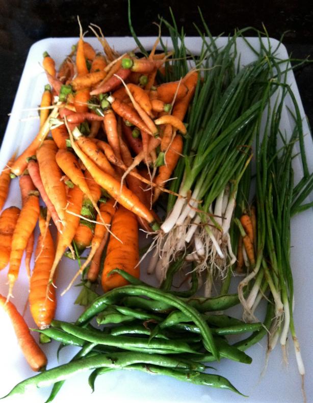carrots-onions-614