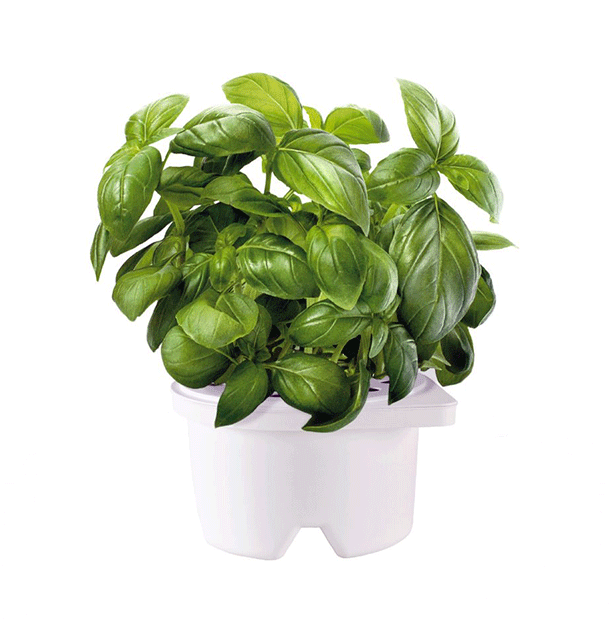 Click and Grow Self-Watering Planter and Herb Pot