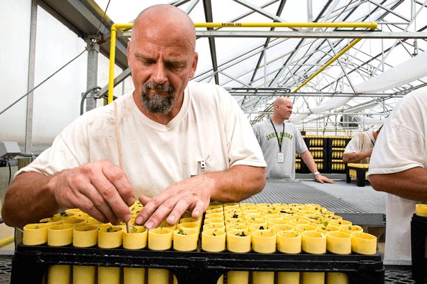inmates-gardening-in-prison-conservation-nursery