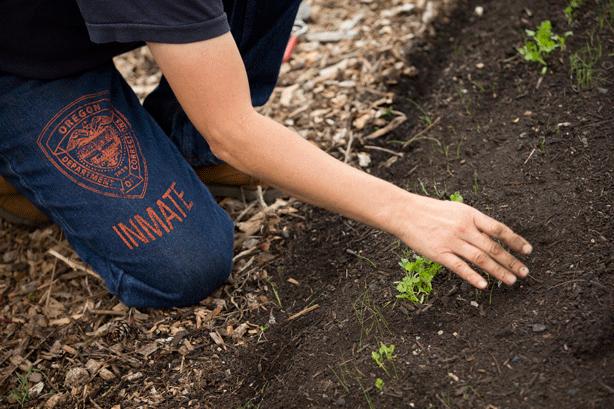 Inmate-planting-vegetables-in-Coffee-Creek-prison-garden