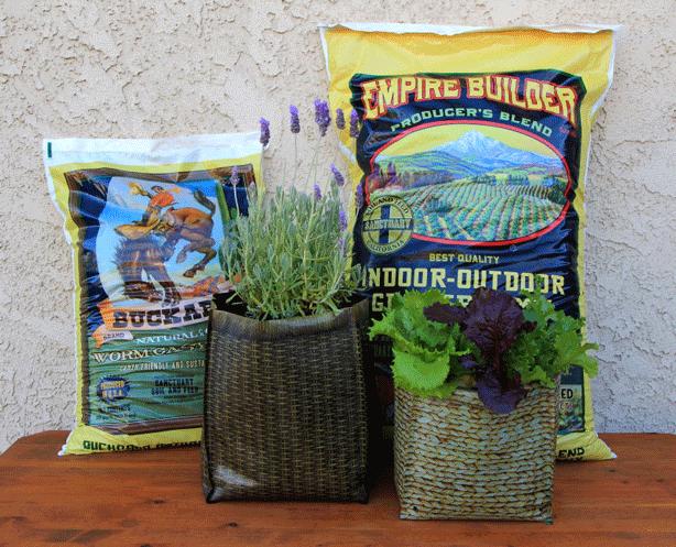 Hula-Soil-Lavender-Lettuce