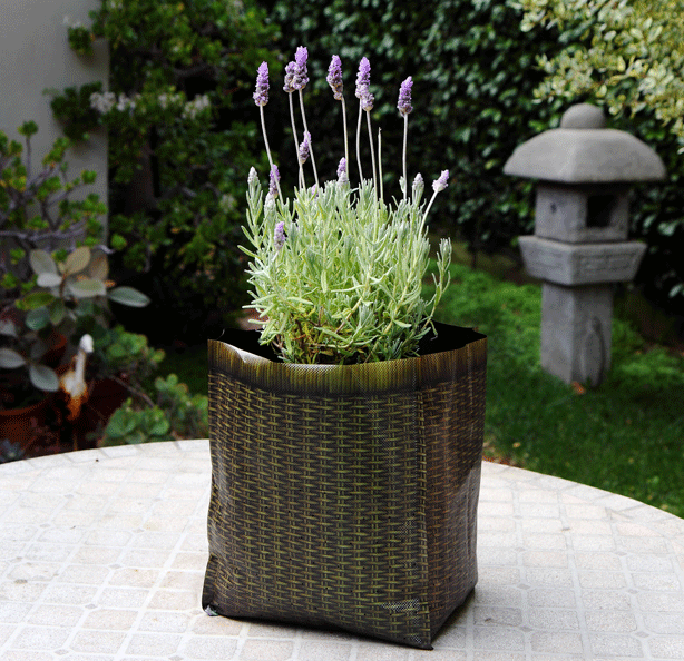 Lavender-on-Table-hula-planter-sanctuary-soil
