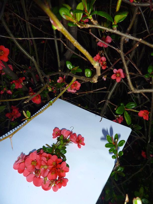 japonica-sandra-alcorn-designer-notebook