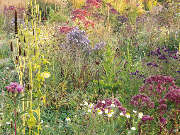 8 trend setting european urban garden designers mygardenschool for Garden designers at home noel kingsbury