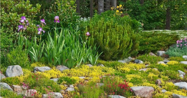 USe a rockery to add texture to your garden.