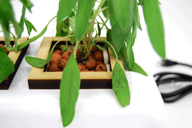 hydropod-Designer-Tabletop-Hydroponic-Planter