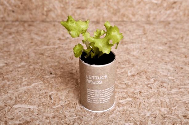 urban-survival-pack-ryan-ramones-lettuce-plant