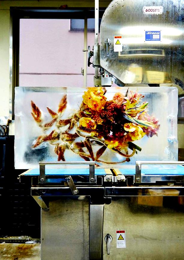 iced-flowers-makoto-azuma-production-urbangardensweb