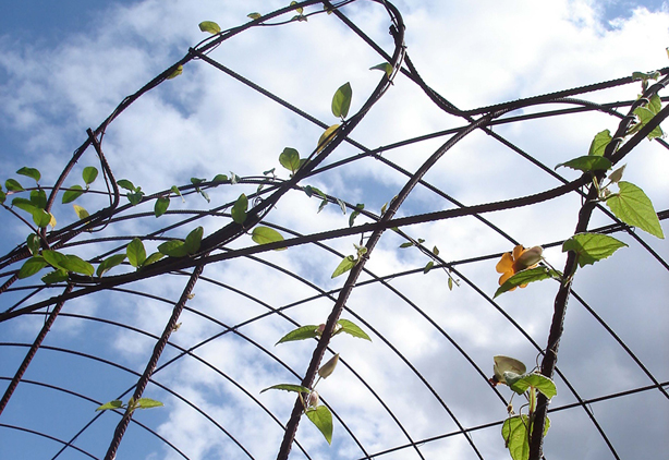 francis-beninca-climbing-vines-on-arbor-urbangardensweb