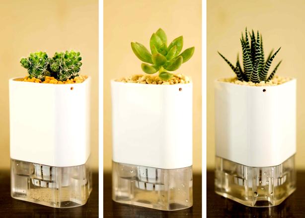 connectapot_trio_succulents_urbangardensweb
