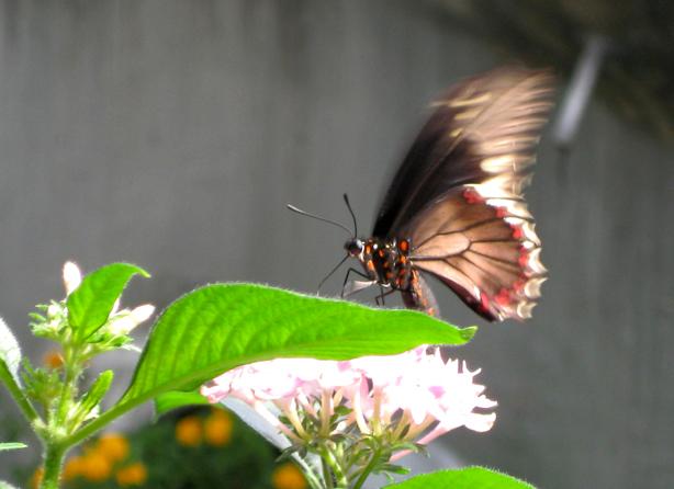 husos_bioclimate-building-butterfly-garden_urbangardensweb