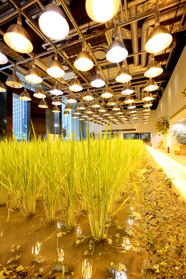 pasona-rice-paddy3-urbangardensweb