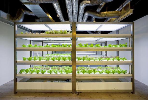 pasona-urban-farm-hydroponic-crops-urbangardensweb