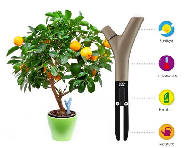parrot-wireless-plant-sensor-urbangardensweb