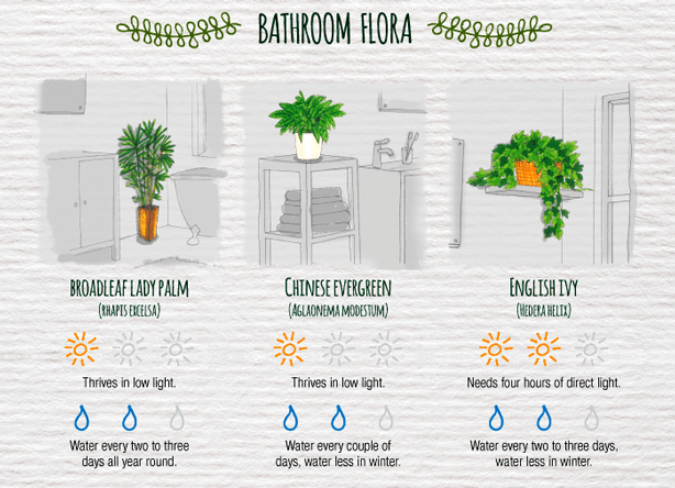 Indoor-Plant-Care-Cheatsheet-BATHROOM