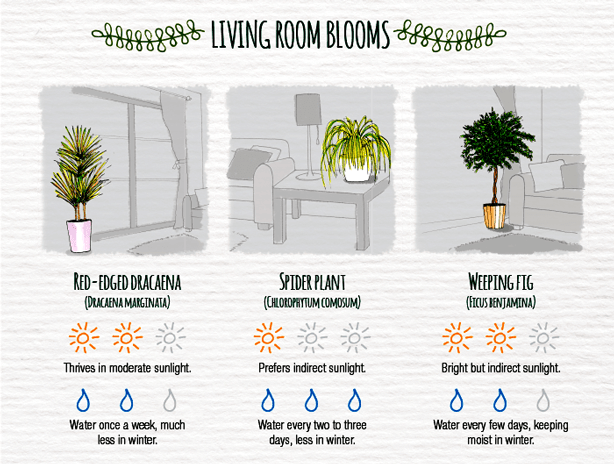 Indoor-Plant-Care-Cheatsheet-LIVINGROOM
