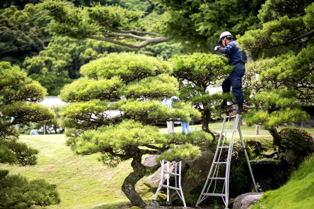 gardener wearing new high-tech air-conditioned jacket while trimming tree