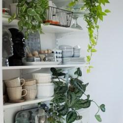 Urban Jungle Bloggers - Kitchen Greens