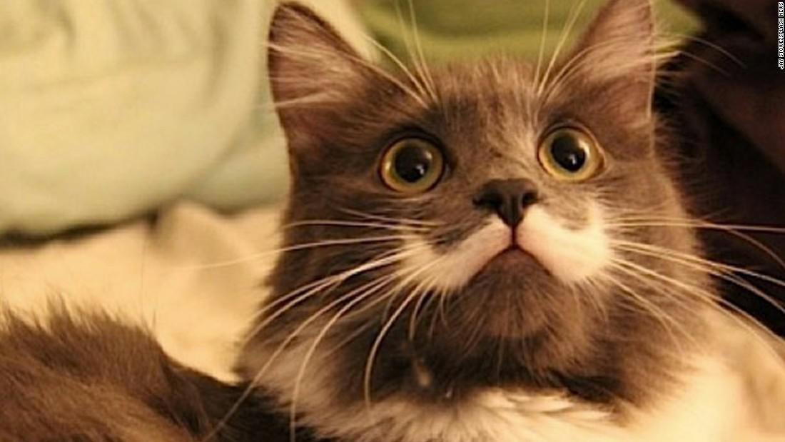 150324154025-14-internet-cats-restricted-super-169