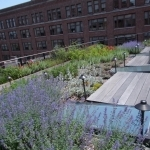 Green Roofs Design in NYC