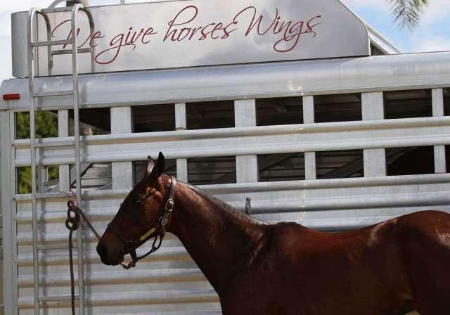 Dutta Corp horse trailer