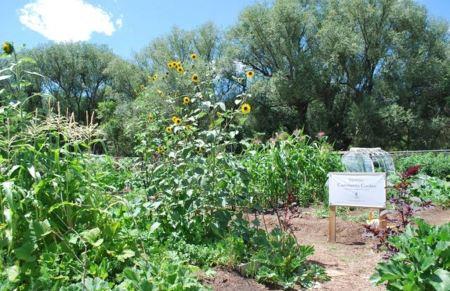 Growing Sustainability