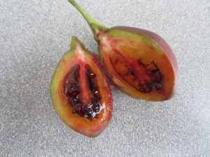 Tamarillo (Solanum betacea) not absolutely ripe but really good. It's tart, with an exotic, tropical fruit taste that I cannot describe. I'll need to eat about a dozen more.